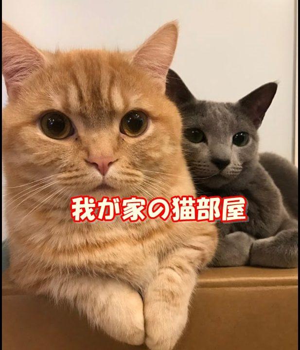 うちの猫部屋