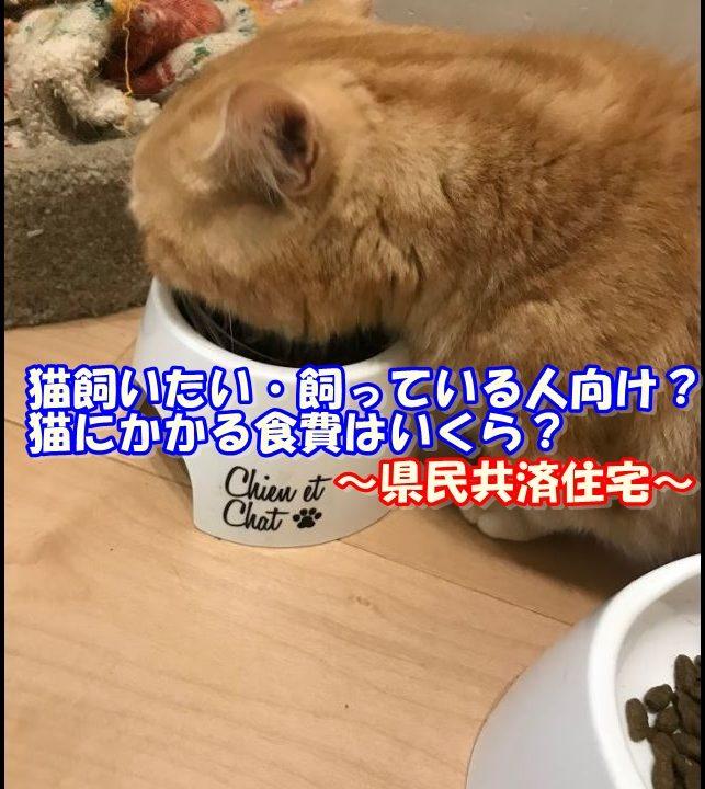 猫飼いたい 餌代は?
